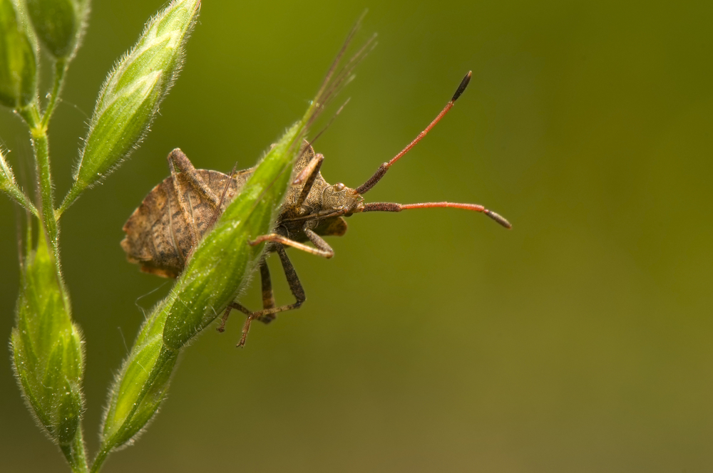 8 Tips to Keep Out Stink Bugs and Other Pests
