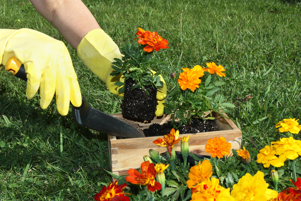 Prep your Property for Spring with this Action Plan