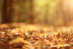 How to Maintain Your Property Landscapes this Fall