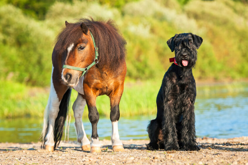 Service Animals - Minature Horse & Dog