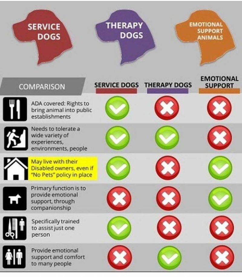 Service Dog vs. Therapy Dog vs. Emotional Support Animals